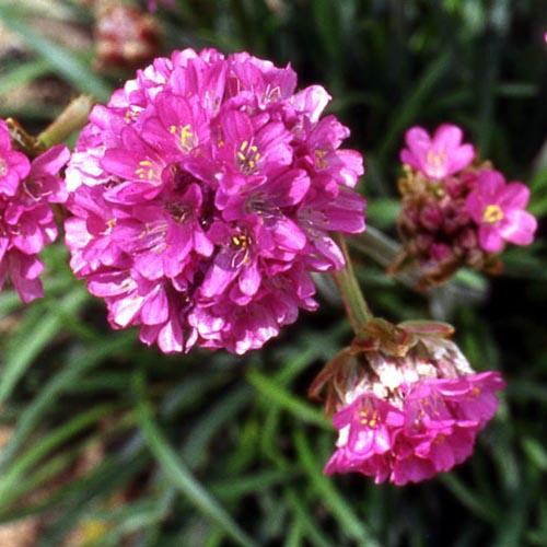 Jardin Masculin Ou Feminin: Jardinerie Fan D. Plantes