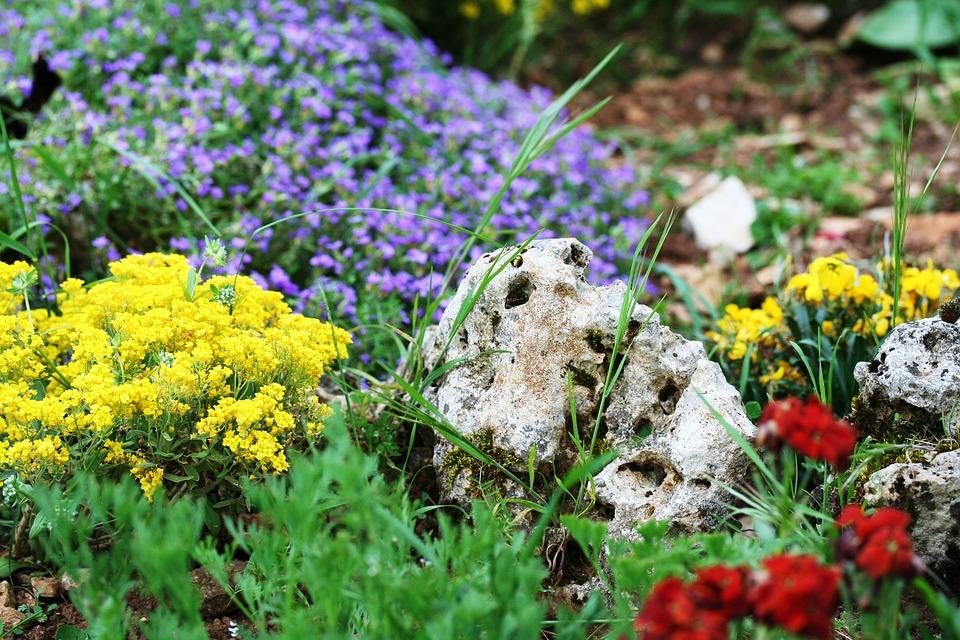 plantes de rocaille jardinerie fan d plantes
