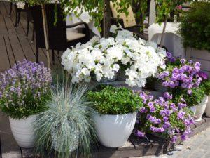 jardinerie de thivars