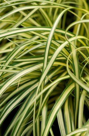 fan d plantes