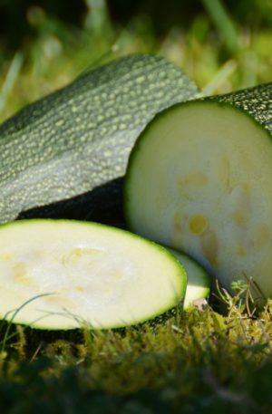 courgette-verte-non-coureuse-des-maraichers fan d plantes