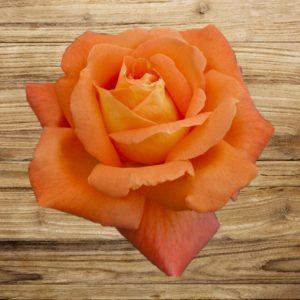 rosier louis de funès