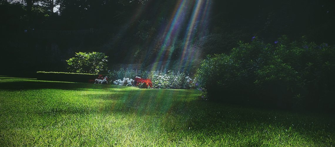 garden-sunlight-grass-flowers-summer-lawn-1456607-pxhere.com